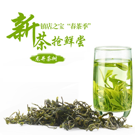 【beplay app商城】包邮 尤溪绿茶  2015年清明新茶